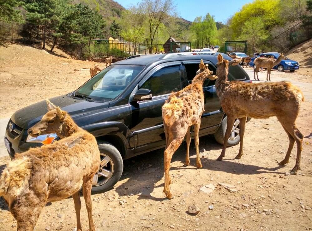 文化和旅游部要求各地进一步加强A级旅游景区安全管理